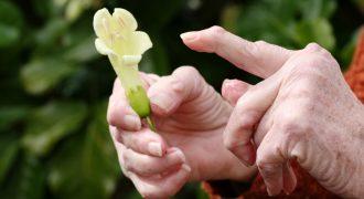 Артриты – различные поражения суставов