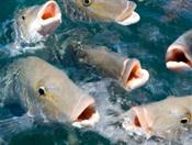 Чем может быть опасна рыба