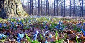 майские травы